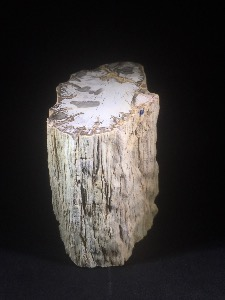 Fossil Wood, from Madagascar (No.48)