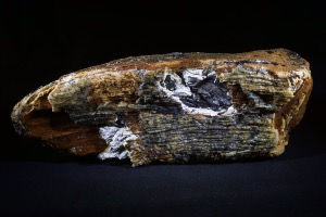 Mammoth Tooth Fragment from North Sea Area, Ice Age (No.120)