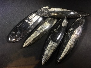 (Individual) Orthoceras (Polished) from Morocco (No.6)