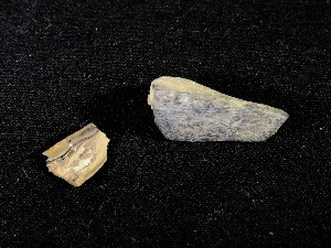 Raptor Bone & Tooth Fragment, from Hells Creek Formation (No.38)
