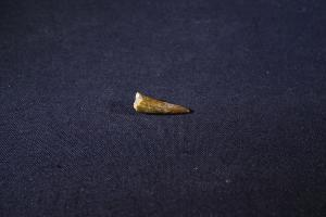 Pterosaur Tooth, from Kem Kem Formation, South East Morocco (No.258)