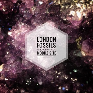 London Fossils and Crystals