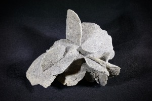Gypsum Desert Rose, from Algeria (No.875)