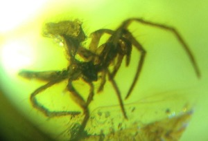 Amber - Baltic - 1 Spider (Specimen no. 109)