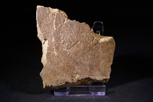 Tyrannosaurs Rex Bone Fragment, from Hell Creek Formation, Eastern Montana, USA (No.89)
