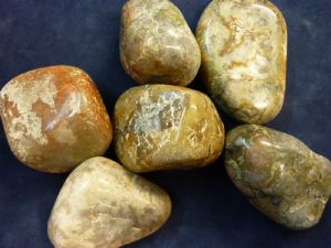 Dinosaur Coprolite selection 5 pieces