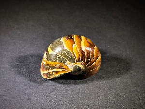 Polished Nautilus, from Madagascar (No.119)