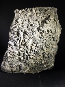 Crinoid (Sea Lily) from Fretherne, Gloucestershire, England (No.28)
