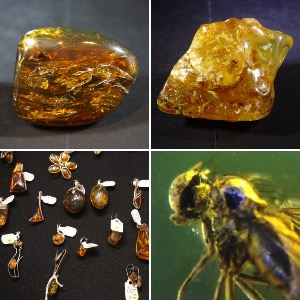 Amber & Copal with inclusions + Amber / Copal / Jewellery